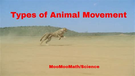 Life Science Types of Animal Movement YouTube