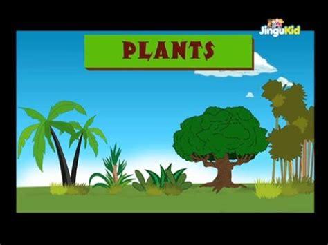 learn  plants easy learning  children nursery