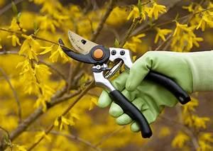 Wann Apfelbäume Schneiden : forsythie wann sollten sie sie schneiden ~ Lizthompson.info Haus und Dekorationen
