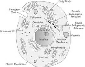 Structure of Cell Organelles
