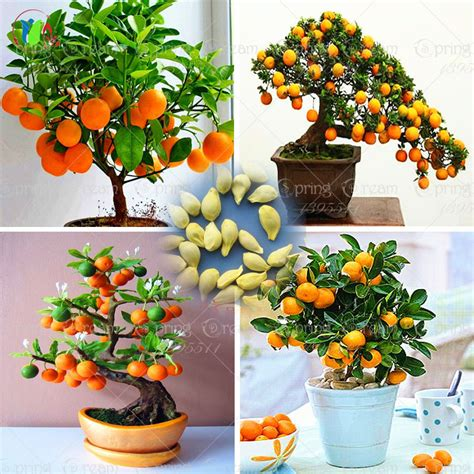 Online Buy Wholesale Fruit Trees From China Fruit Trees