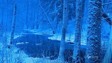 poland forest river  bing desktop wallpaper preview