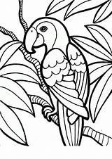 Coloring Parrot Printable Birds Tropical Pet Pdf Craft sketch template
