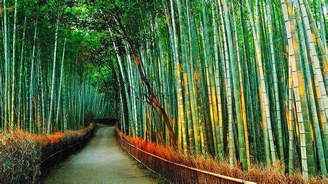 bamboo varieties clumping bamboo for elegant yards