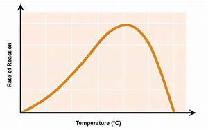 Effect Of Temperature On Enzyme Catalase  How Does