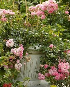 Hohe Pflanzkübel Für Rosen : topfrosen pflanzen und pflegen diese rosen kann man im k bel halten ~ Whattoseeinmadrid.com Haus und Dekorationen
