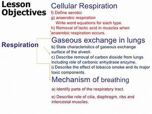 What Is The Chemical Equation For Cell Respiration
