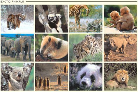 Blog Exotic Mammals