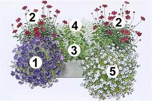 Balkonkästen Bepflanzen Beispiele : 25 b sta id erna om blumenk sten bepflanzen p pinterest ~ Lizthompson.info Haus und Dekorationen