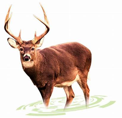 Deer Buck Tracking Solution Pluspng Transparent Hartzell