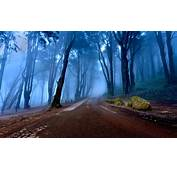 Landscapes Of Portugal Autumn Road Forest With Tall Trees
