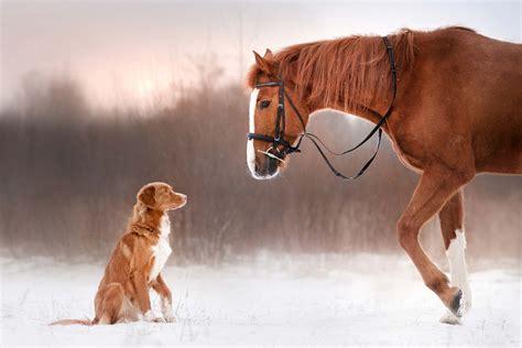 horse dog horses winter pet dogs animal supplements walking diamond tieren analysen ganzheitliche pferden behandlungen chiropractor chiropractic story introduce banner