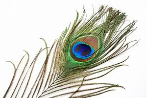 Peacock feathers | Shamanic Drum