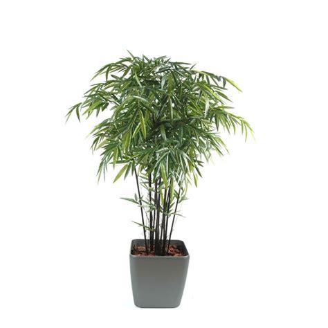 bambou noir semi naturel en pot carr 233 elementvegetal