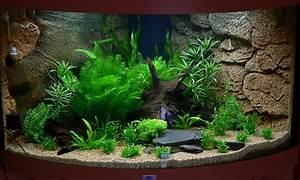 Juwel Trigon 350 : juwel trigon 190 aquarium forum ~ Frokenaadalensverden.com Haus und Dekorationen