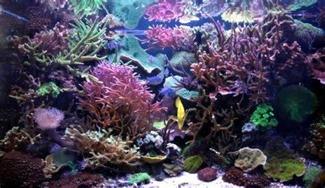 re led aquarium eau de mer rss alpheus made to order led ls some serious research them marine aquariums
