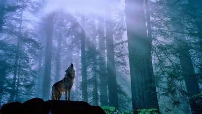 Wolf Howling Forest 1080 Windows Desktop Wallpapers