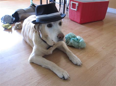Dog In A Hat By Gloomy City On Deviantart