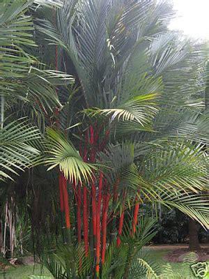The Tropical Garden Of The RETREAT: November 2011
