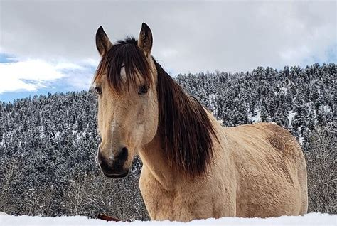 montana weather cold something horses