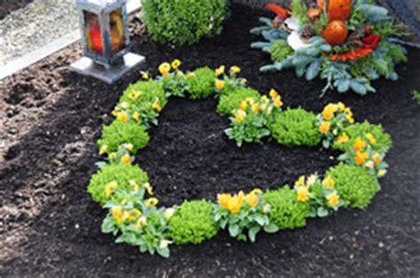 lavita kaufen wo winterharte pflanzen f 252 r gr 228 ber