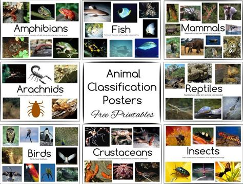 animal classification posters and free printables