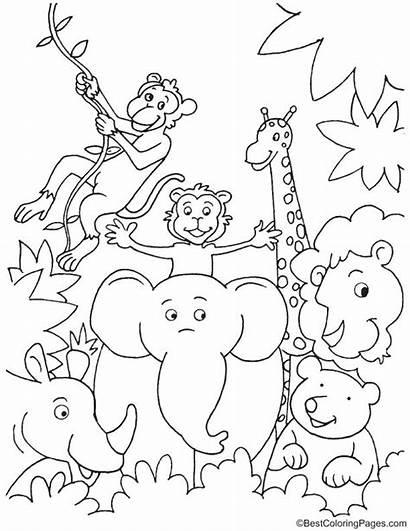 Jungle Coloring Pages Fun Animal Animals Safari