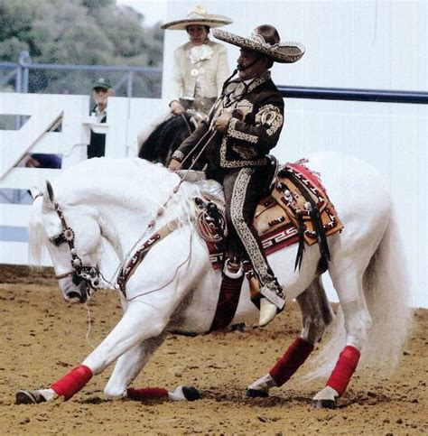 horses horse mexican spanish pure equestrian heritage breeds vegas las charro mexico center event hotel point south sept aug light