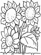 Sunflower Coloring Pages Flower Print Flowers Printable sketch template