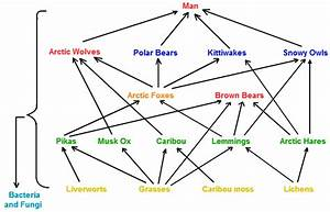 Tundra Food Web