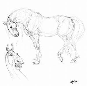 Horse Sketches by chalicothere on DeviantArt