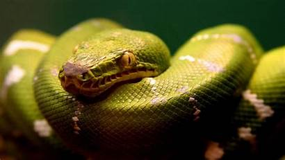 Anaconda Pixelstalk Widescreen