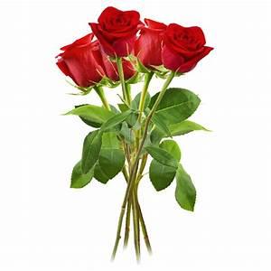 1 Rote Rose Bedeutung : rosen rot die passende geschenkidee ~ Whattoseeinmadrid.com Haus und Dekorationen