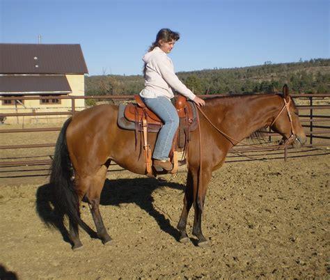 horses riding quarter spice lark zippity hannah bar mare jameson weebly