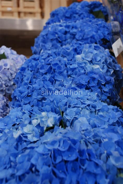 fiori blu silviadeifiori