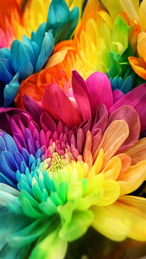 colorful flowers colorful flowers awesome collection of flower
