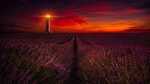 Sunset Lavender Field Lighthouse 5k Wallpapers