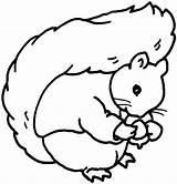 Squirrel Coloring Play sketch template