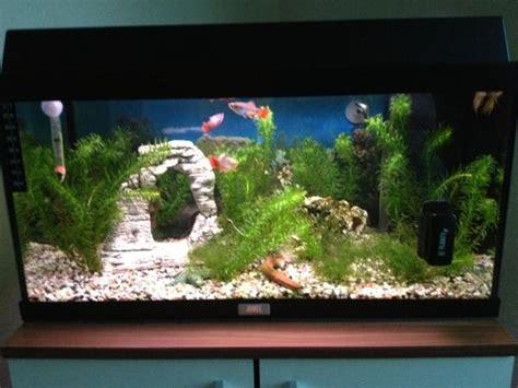 Aquarium Juwel 60 Liter Mit Viel Zubehör In Nürnberg