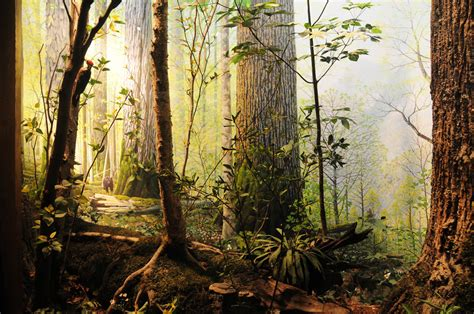 best forests in america image gallery north american forest
