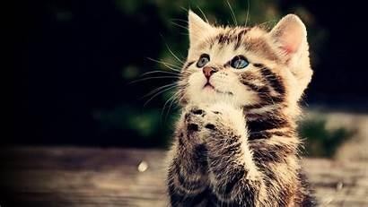 Animal 1080p Wallpapers Funny Praying Kitten