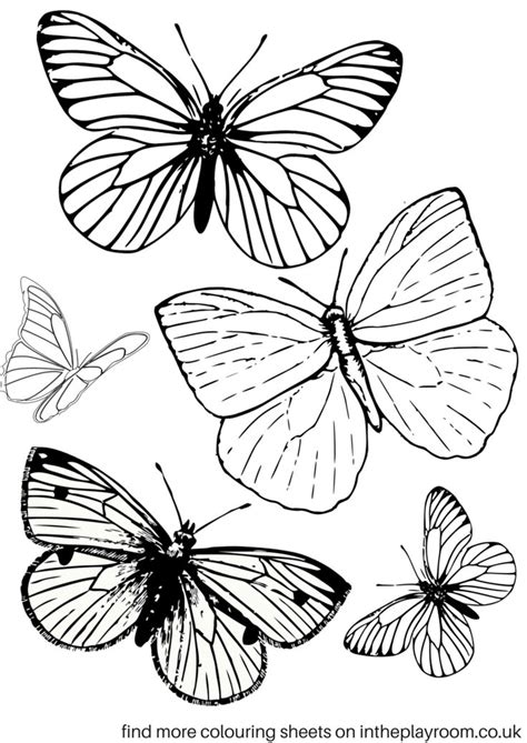 butterfly coloring pages images  pinterest