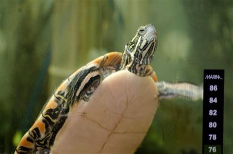 heating an indoor aquatic turtle habitat