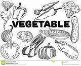 Vegetable Coloring Adults Zentangle Stress Lines Anti Adult Lace sketch template