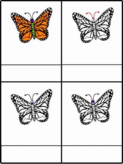 Montessori Butterfly Parts Nomenclature Scribd