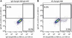 Expression Of At1 Receptor On Cultured Adscs