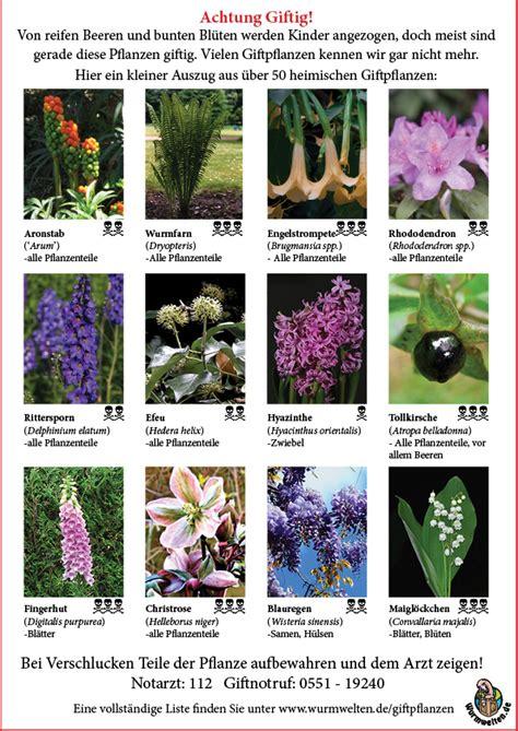 Pilze Im Garten Giftig Für Kinder by Giftpflanzen Im Garten Wurmwelten De