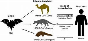 The Origins And Intermediate Hosts Of Sars