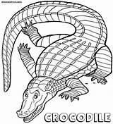 Crocodile Crocodiles Coloriage Coloring Animaux Dessin sketch template