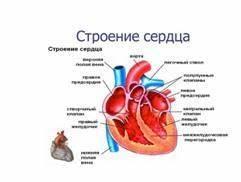 Трикуспидальная регургитация гипертония